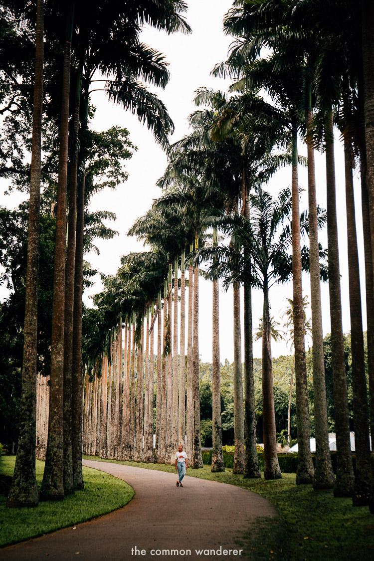 Peradeniya Gardens in Kandy - best things to do in Sri Lanka