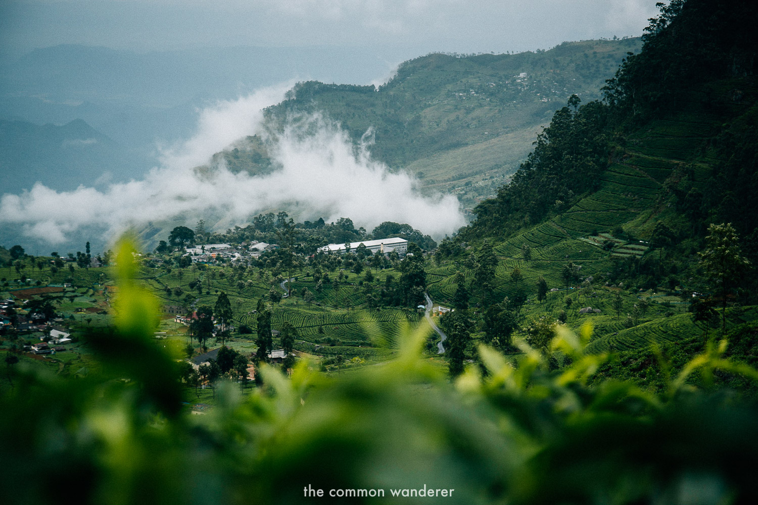Views overlooking Dambethenne tea factory, Haputale Sri Lanka