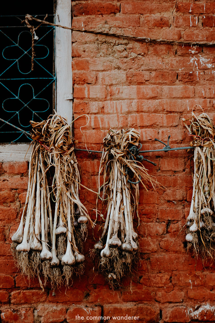 Garlic hung out to dry in Panauti, Nepal