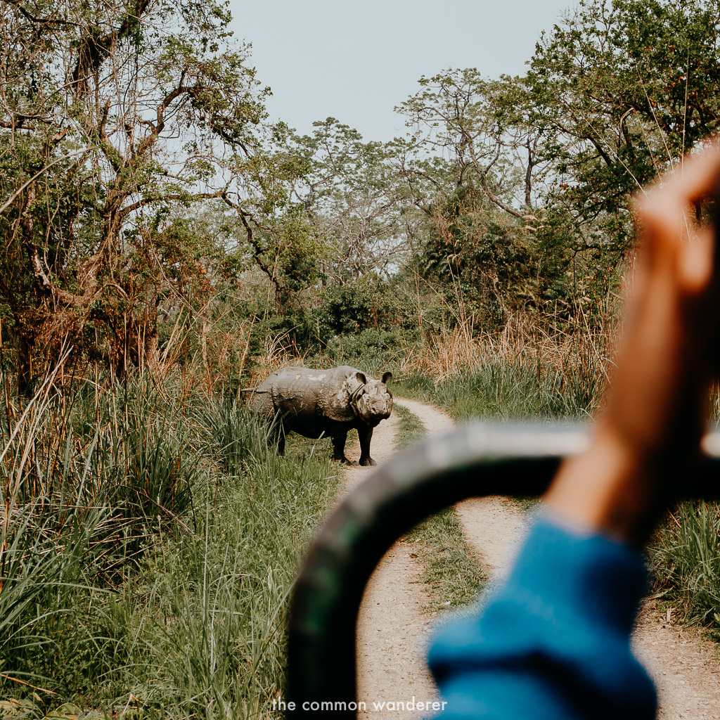 Spotting a rhino on safari in Chitwan National Park, Nepal best things to do