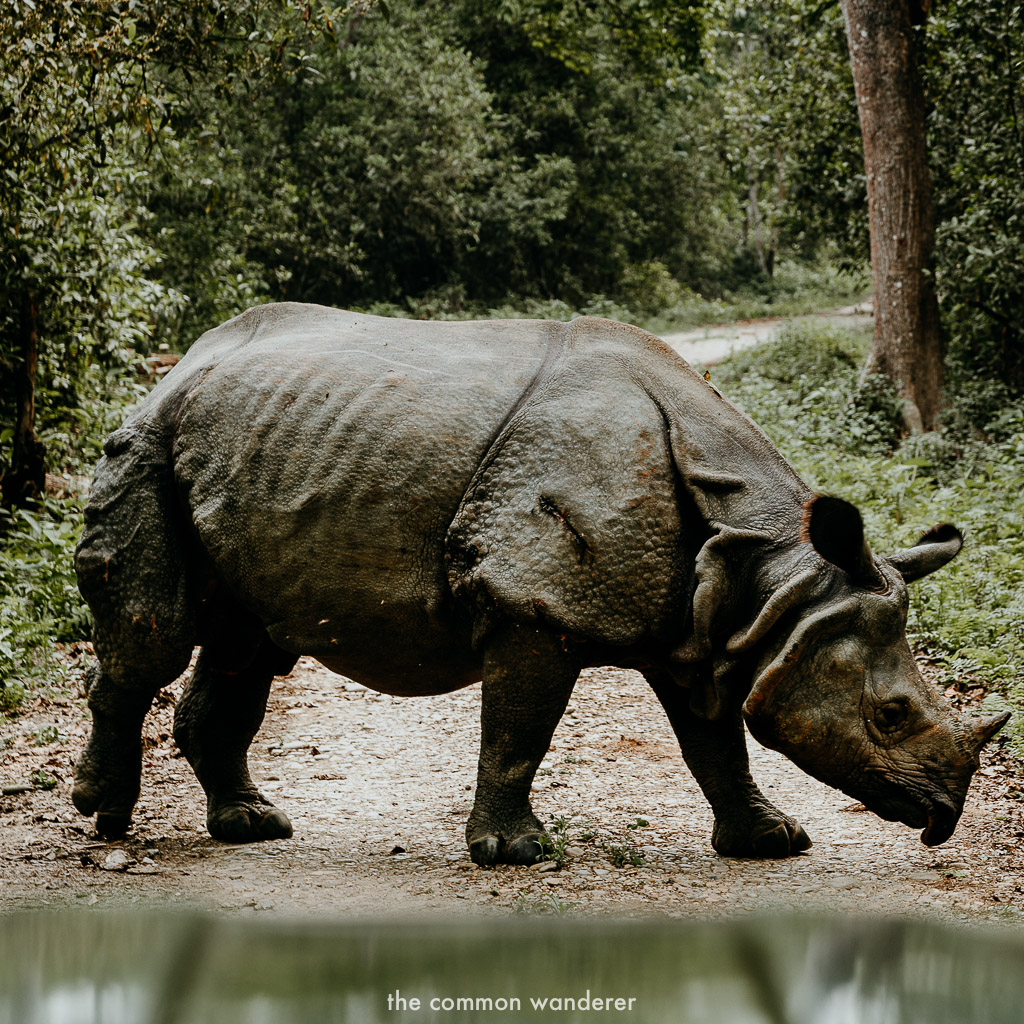 Spotting a rhino in Chitwan National Park