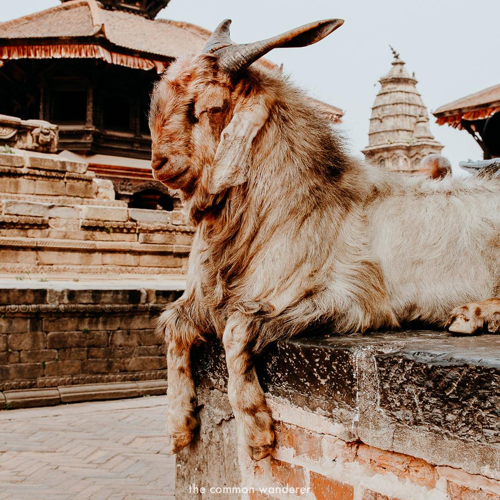 Best things to do in Kathmandu - Bhaktapur Durbar Square
