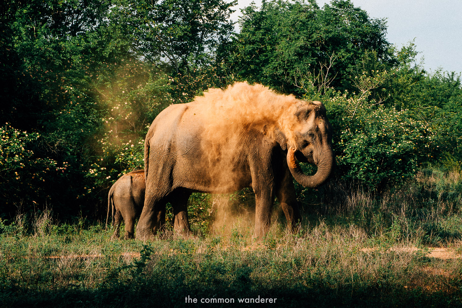 An elephant in the wilds of Sri Lanka, where they should be