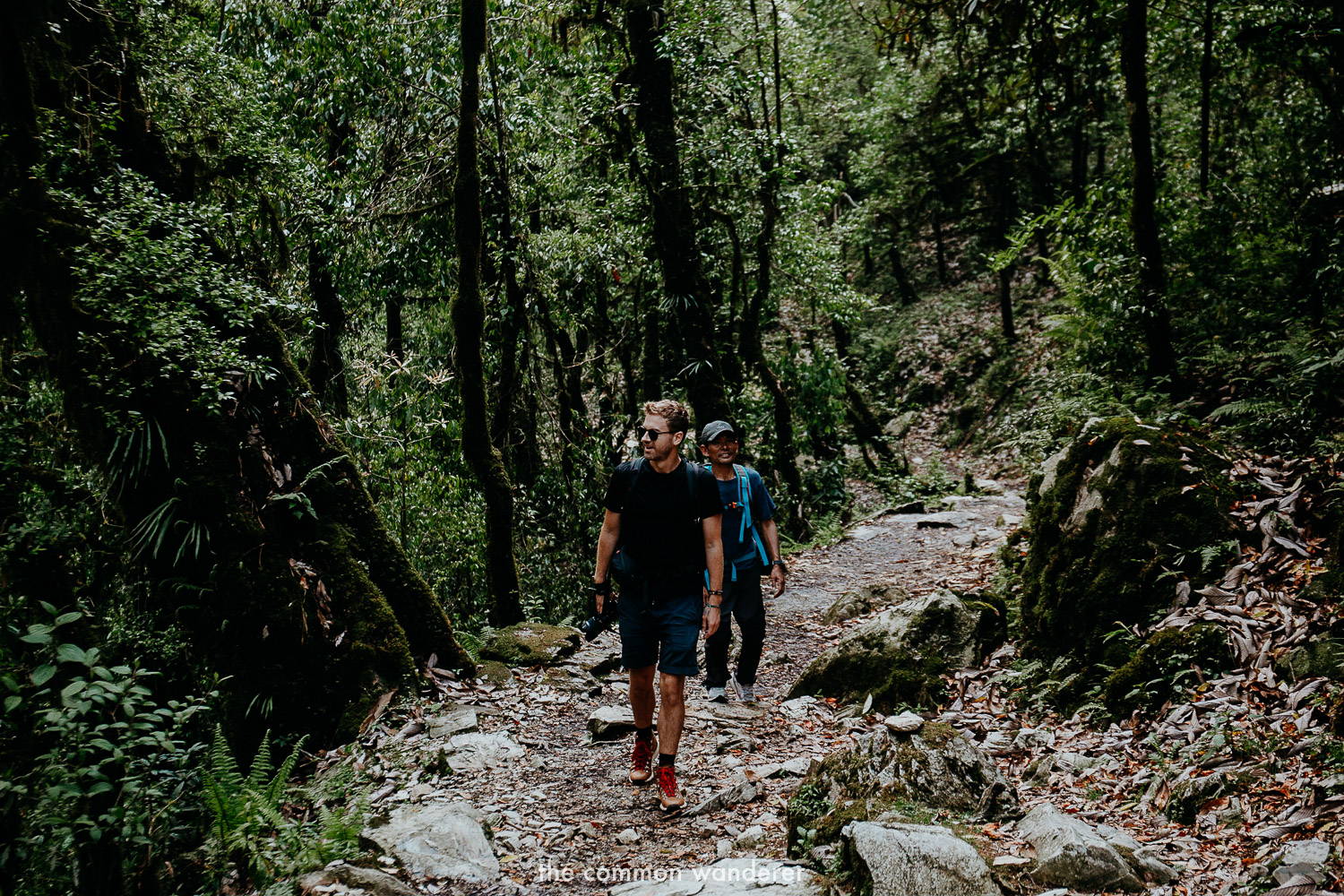 Walking through the forests on the way to Ghorepani, Poon Hill, Nepal
