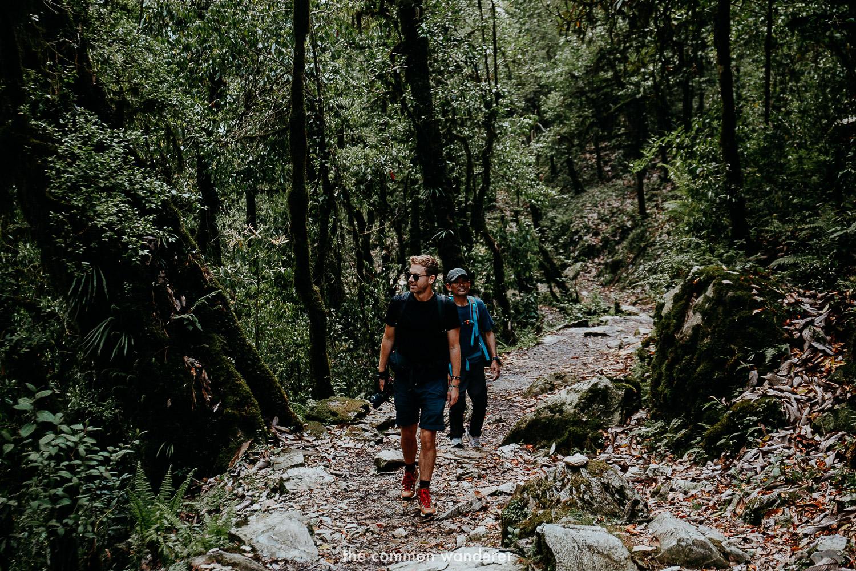 Hiking through the rainforests of Poon Hill Ghorepani trek, Nepal
