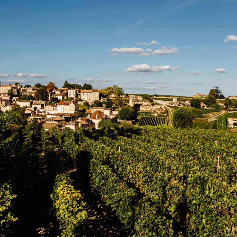 MOYA+Bordeaux+Vines+and+City.jpg