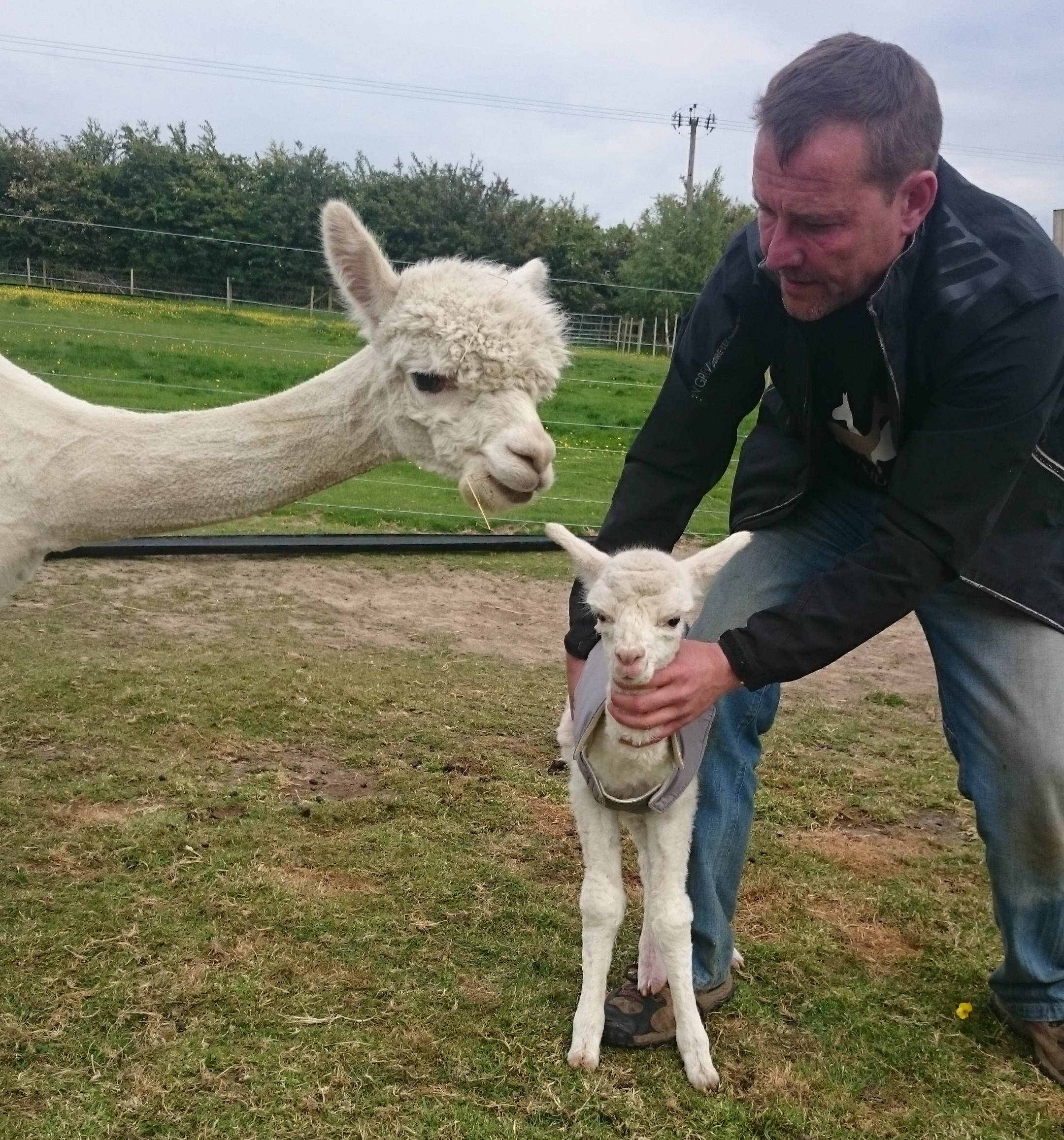 The first cria - a steep learning curve for any new breeder