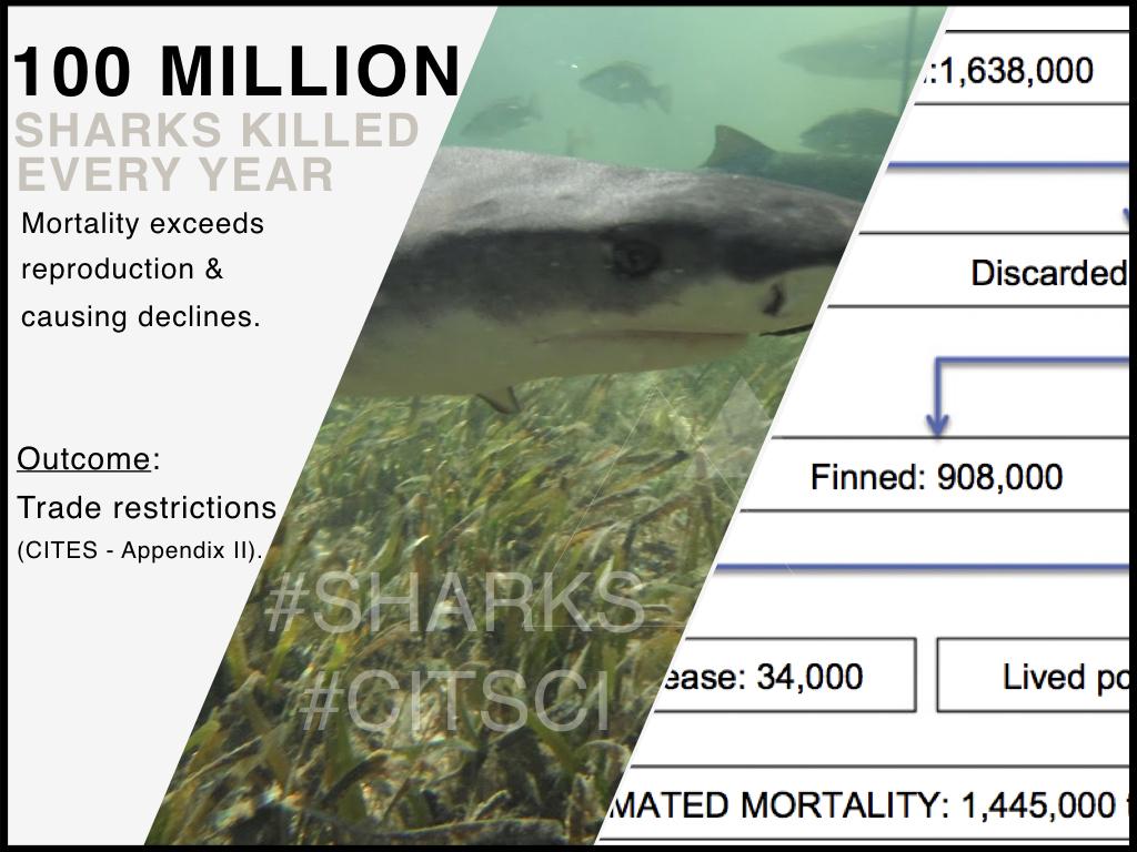 100MillionSharksKilled.jpeg
