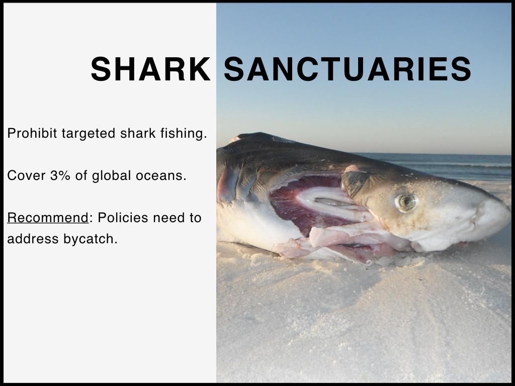 Shark_Sanctuaries2.jpeg