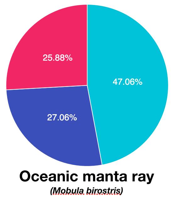 Sp_OceanicManta.png