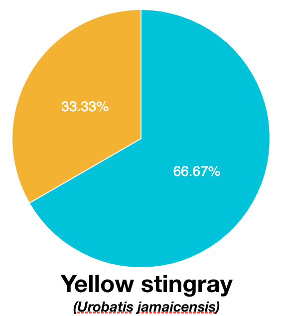Sp_YellowStingray.png