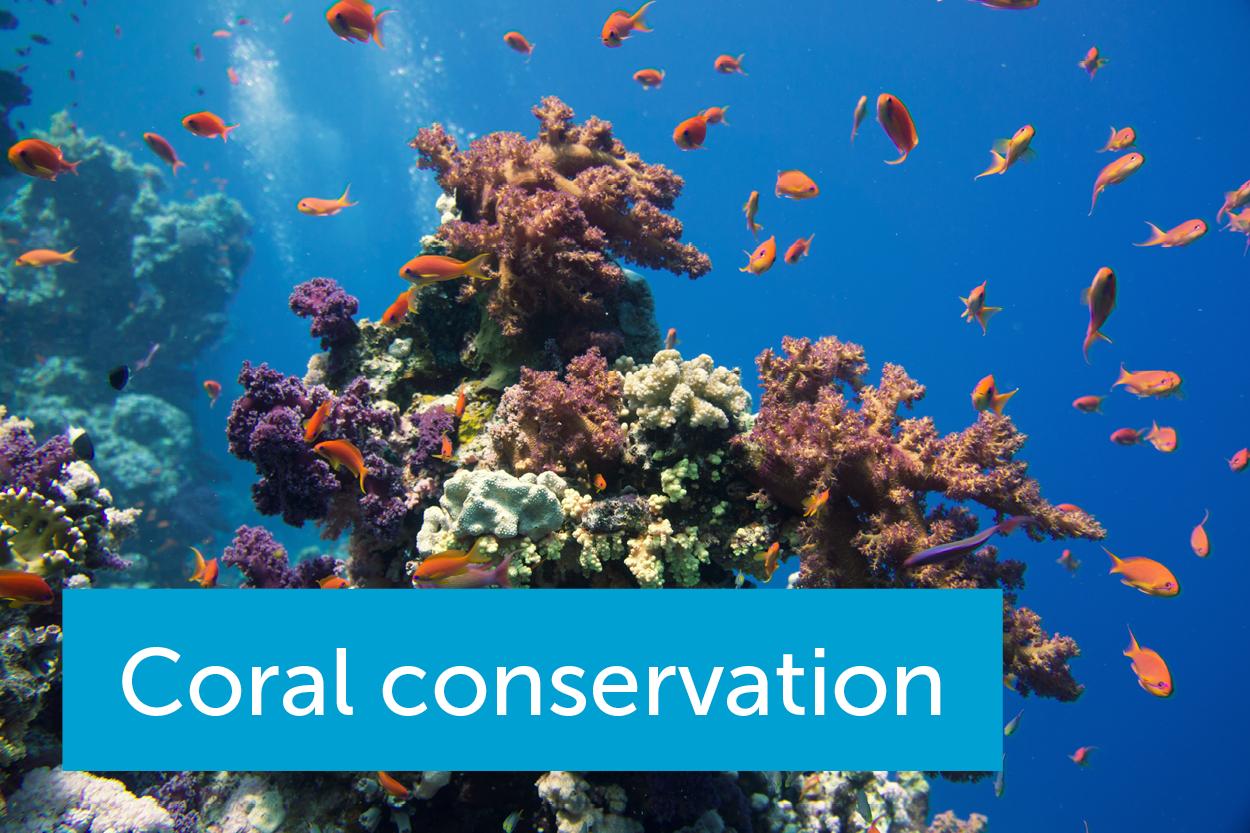 气候变化,过度捕捞,污染:我们如何拯救垂死的珊瑚礁?