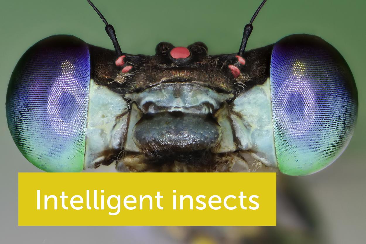 通过研究昆虫的大脑,我们能了解到什么呢?
