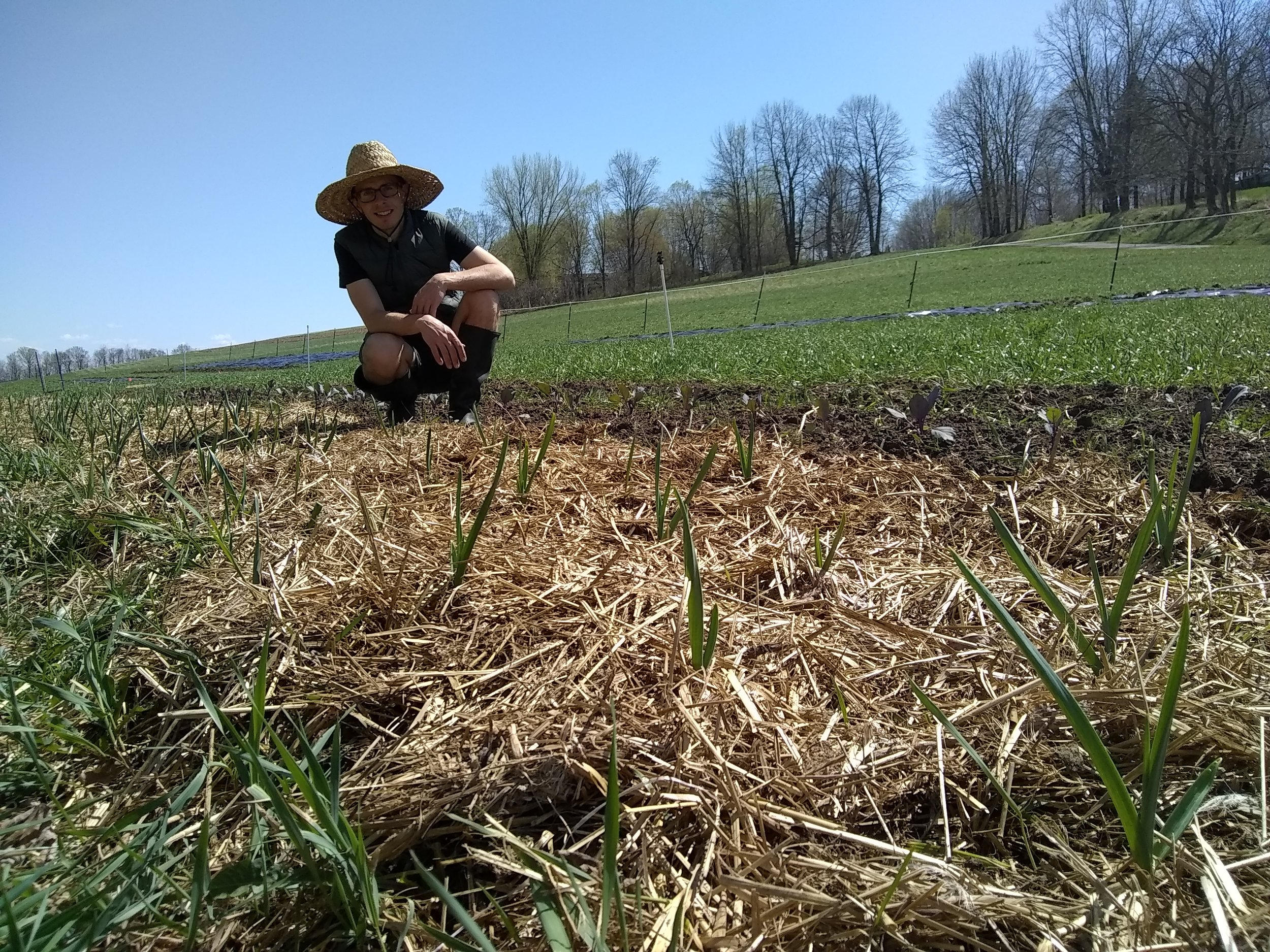 nicholas inspecting our garlic, which was planted on the day of the home inspection in October