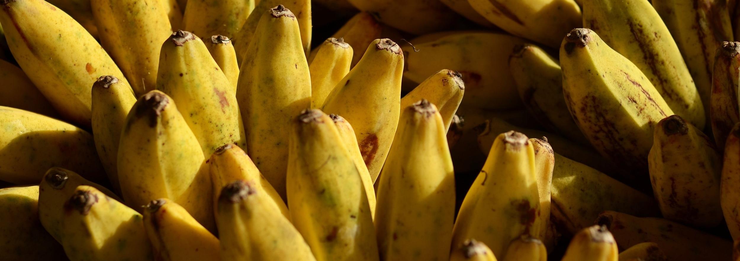 Bananas Toronto
