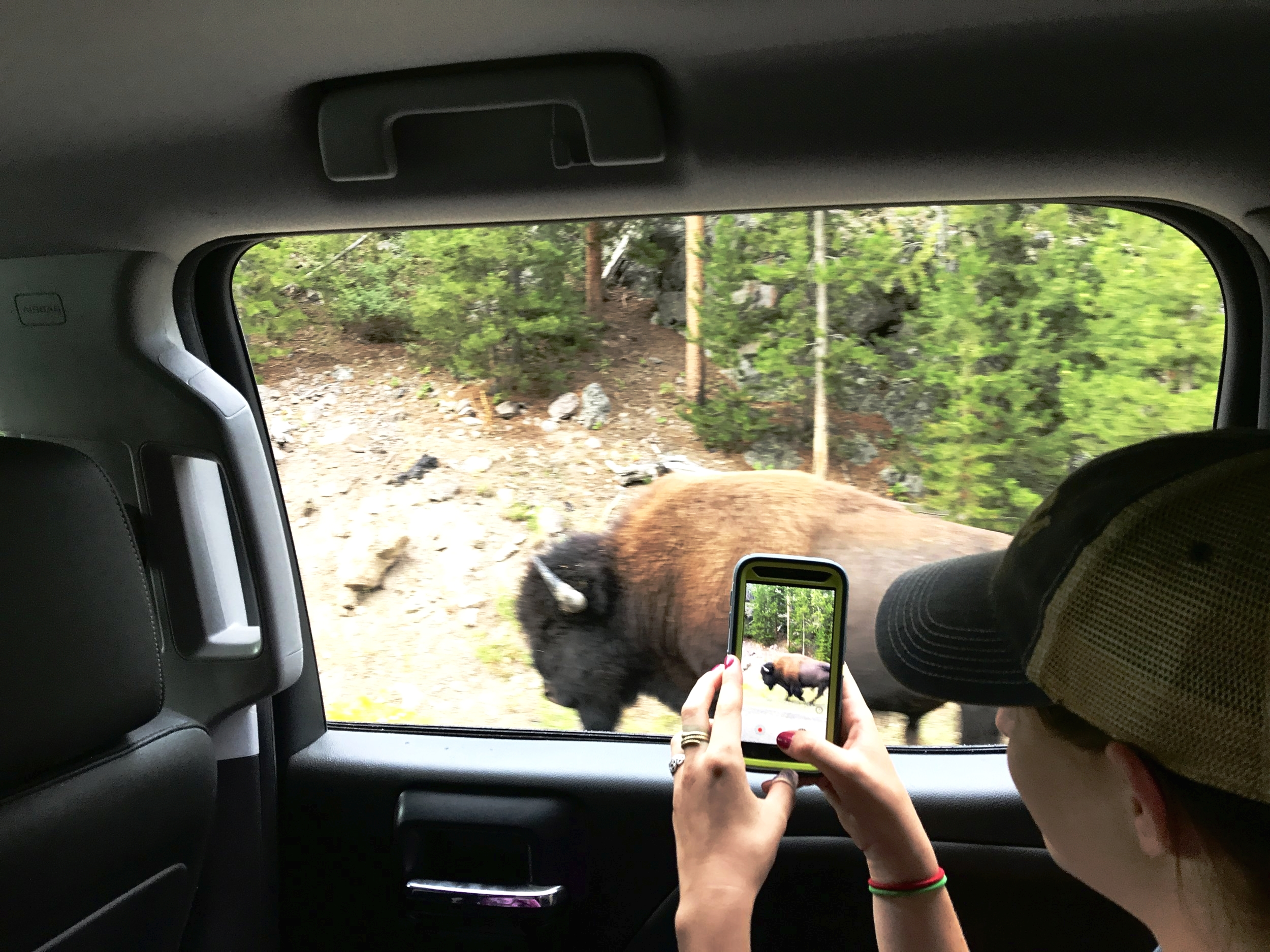 Kori Klingelsmith attempting to blend in like a true YNP tourist. I'm not judging though, bison will always be amazing.