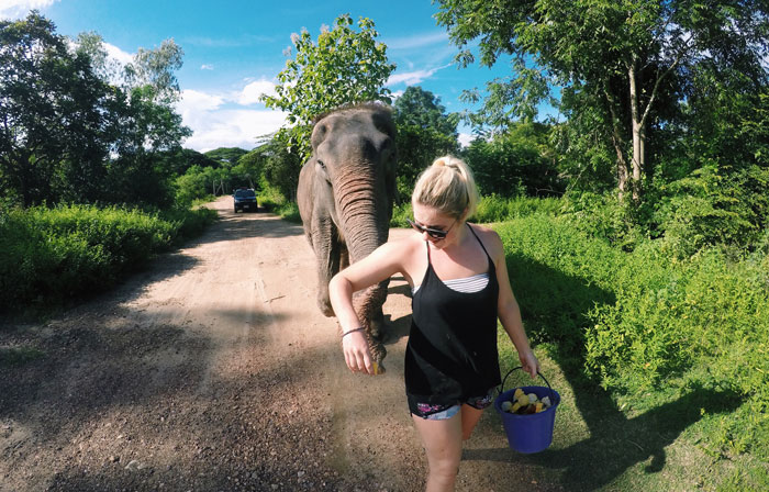 volunteering_with_elephants_while_on_vacation.jpg