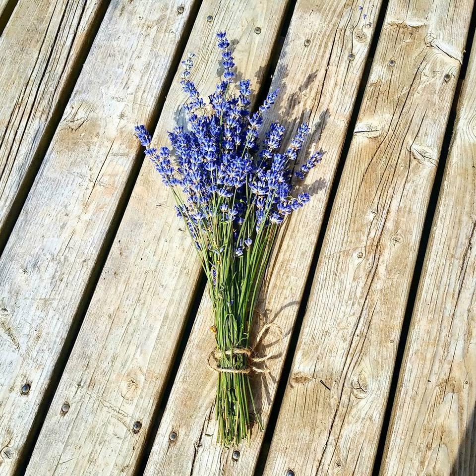 Lacelyn Farm Lavender - 2016