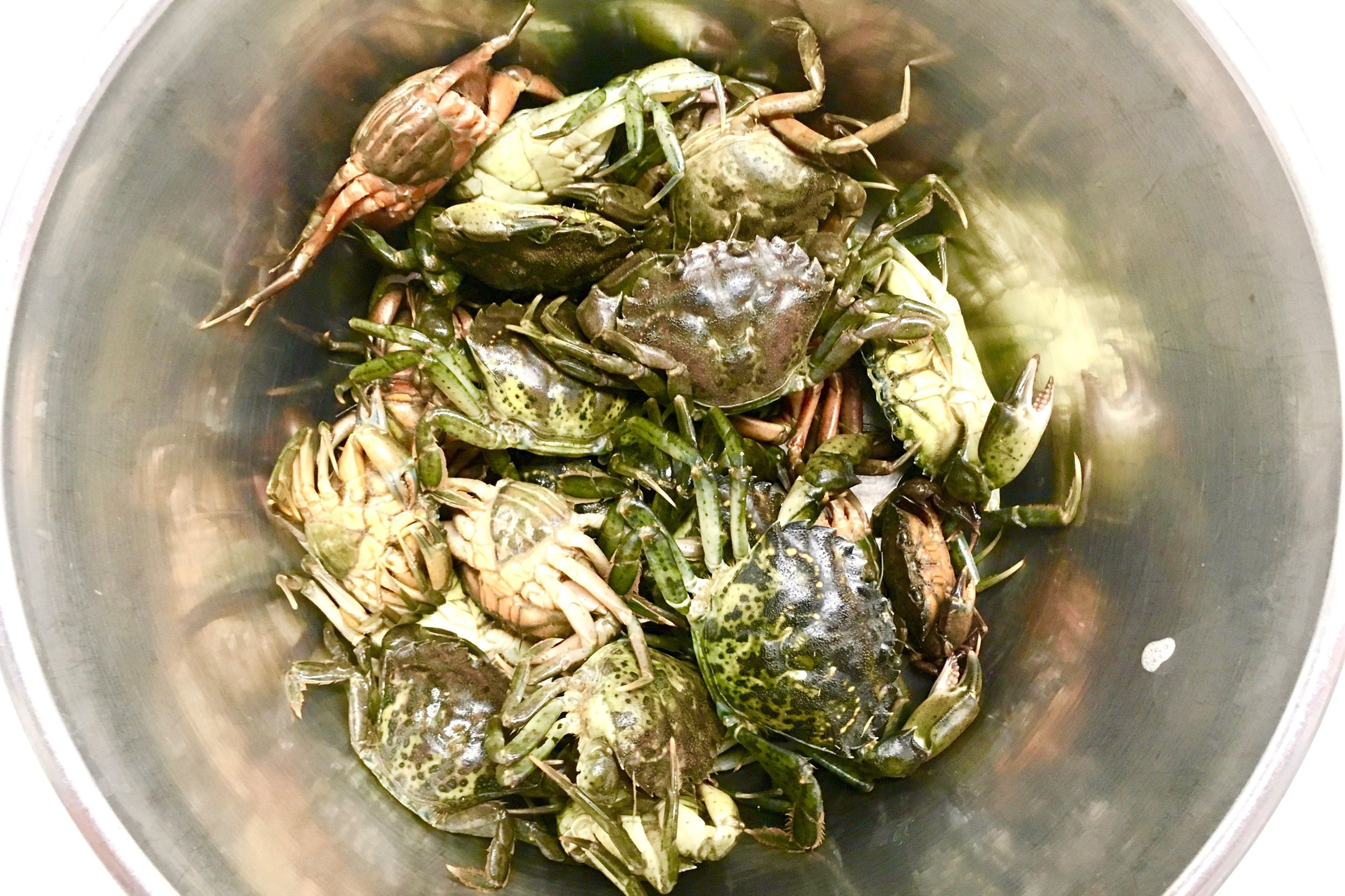 Shore crabs clinking in a can
