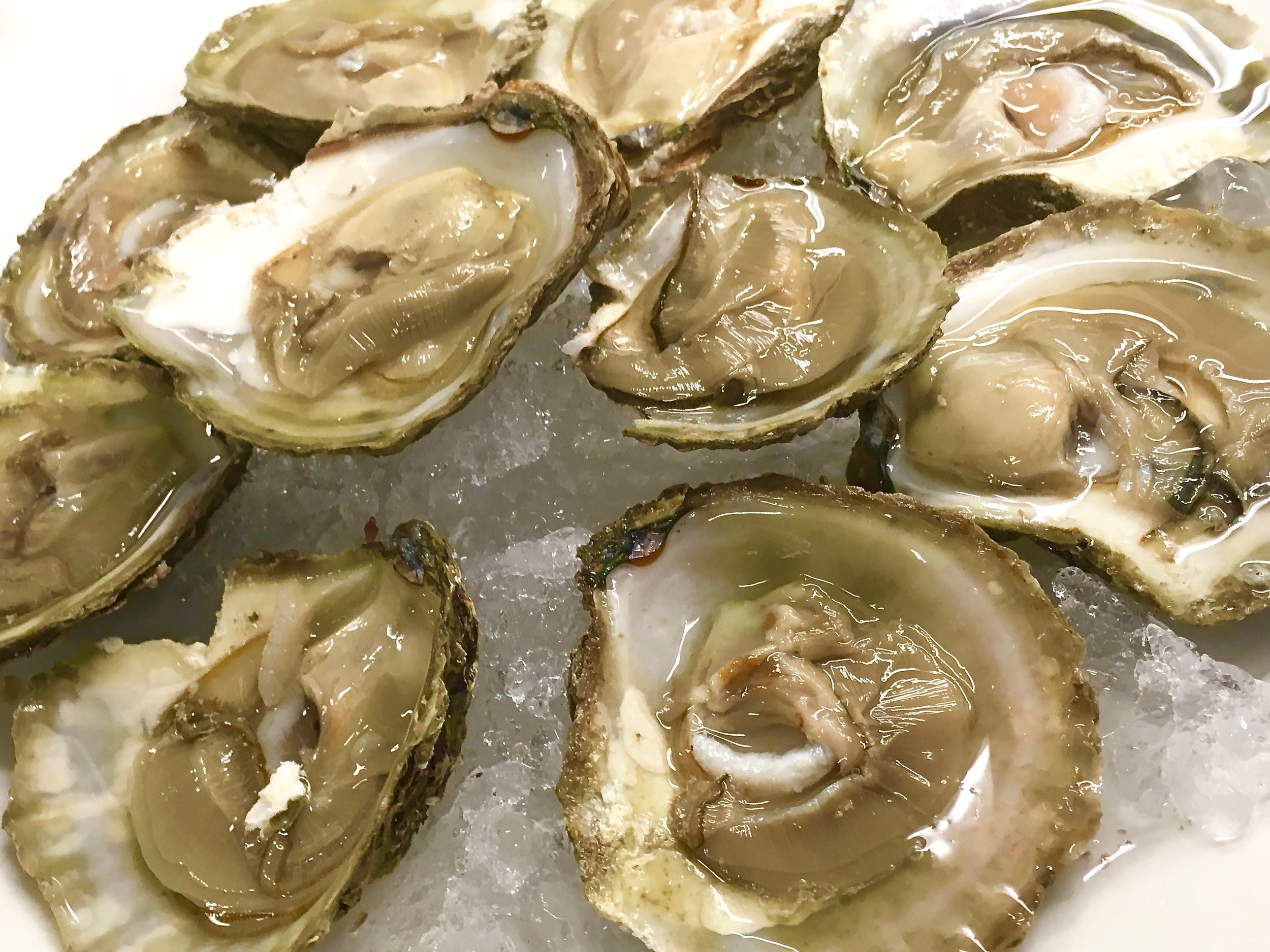 Oysters native to British shores