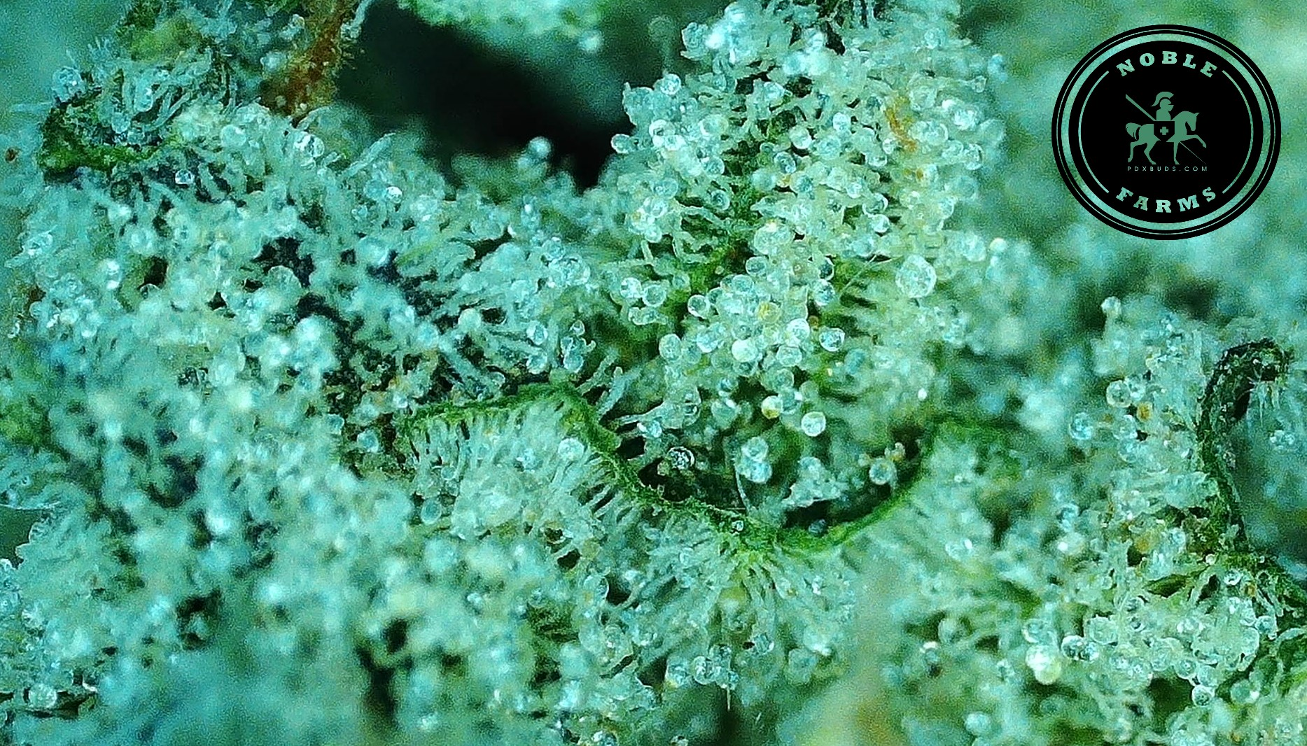 VVS Chem #2 Zoom -- Noble Farms.jpg