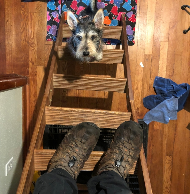 Milo Wants To Help; - storing boxes in the attic.