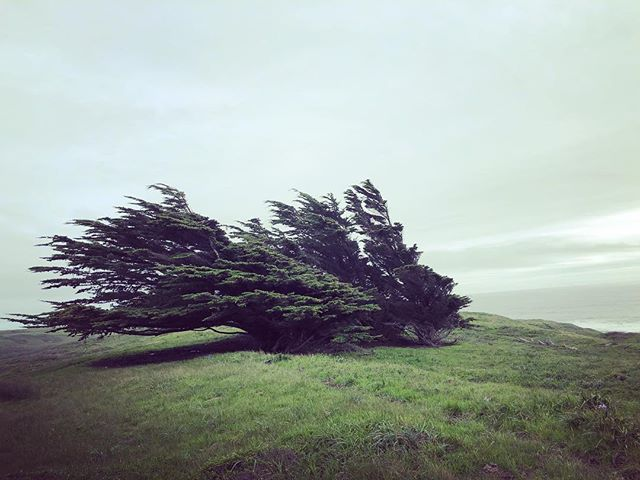 Somatic Psychotherapy supports you in recognizing the deeply embodied ways you have adjusted to your environment and in realizing that those strong coastal winds are no longer blowing. Organisms, and you, have a self-righting capacity. Embrace it.  See to it. Be to it. . . . . . . #somaticpsychotherapy #somatictherapy #embodiment #selfrightingcapacity #selfregulation #be