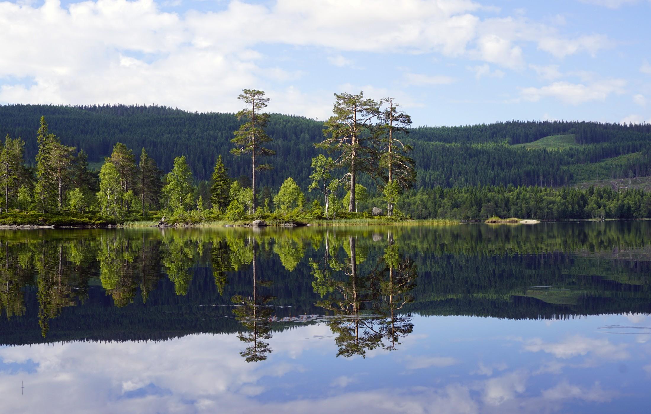 Lake Vesleflåtan at Krokskogen (Photo: VisitOslo/Tord Baklund))