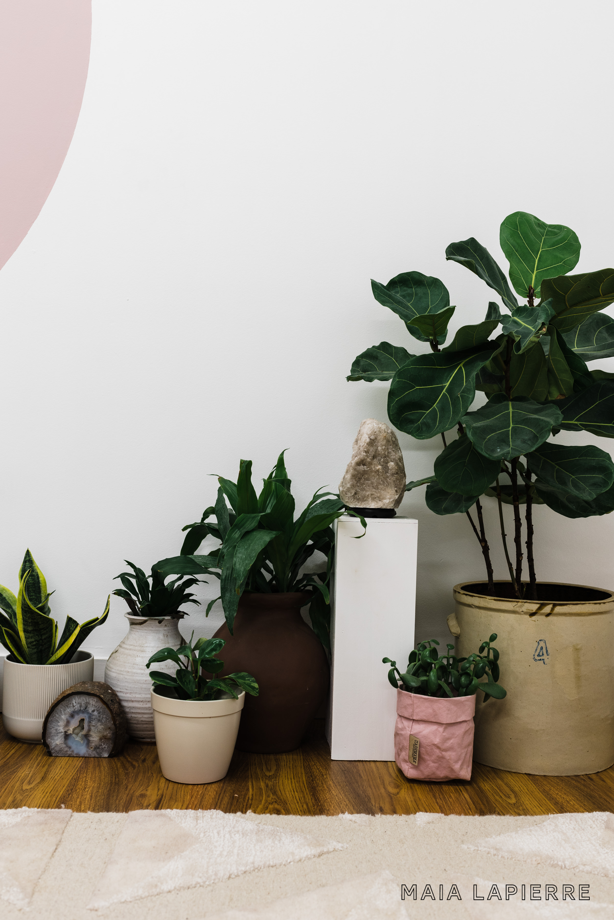 Maia LaPierre Interiors - Flo Meditation Studio Plants