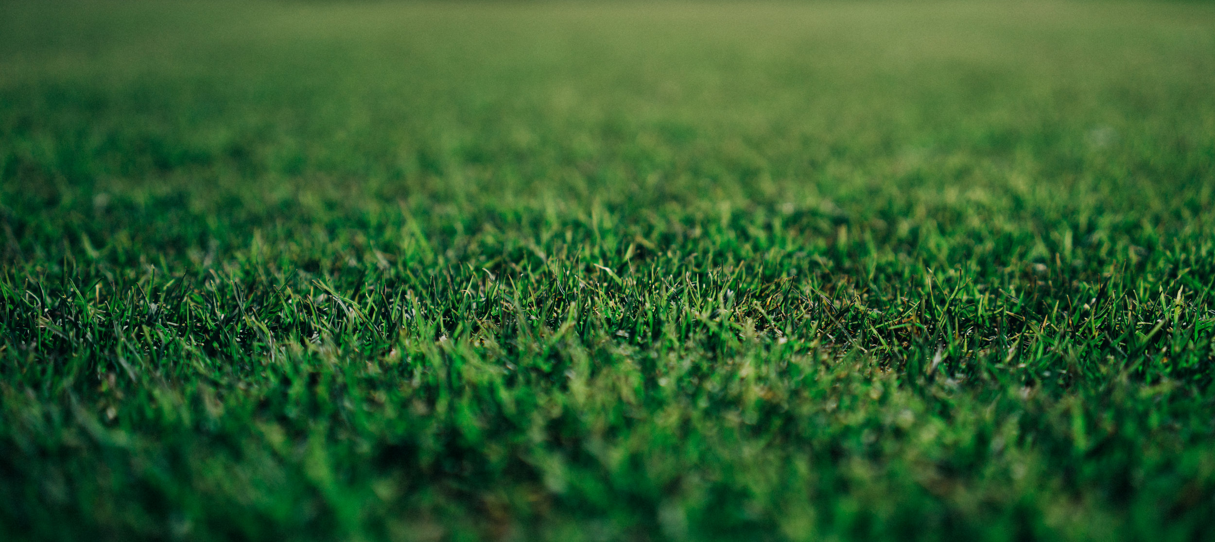 Grassing & Mulching -
