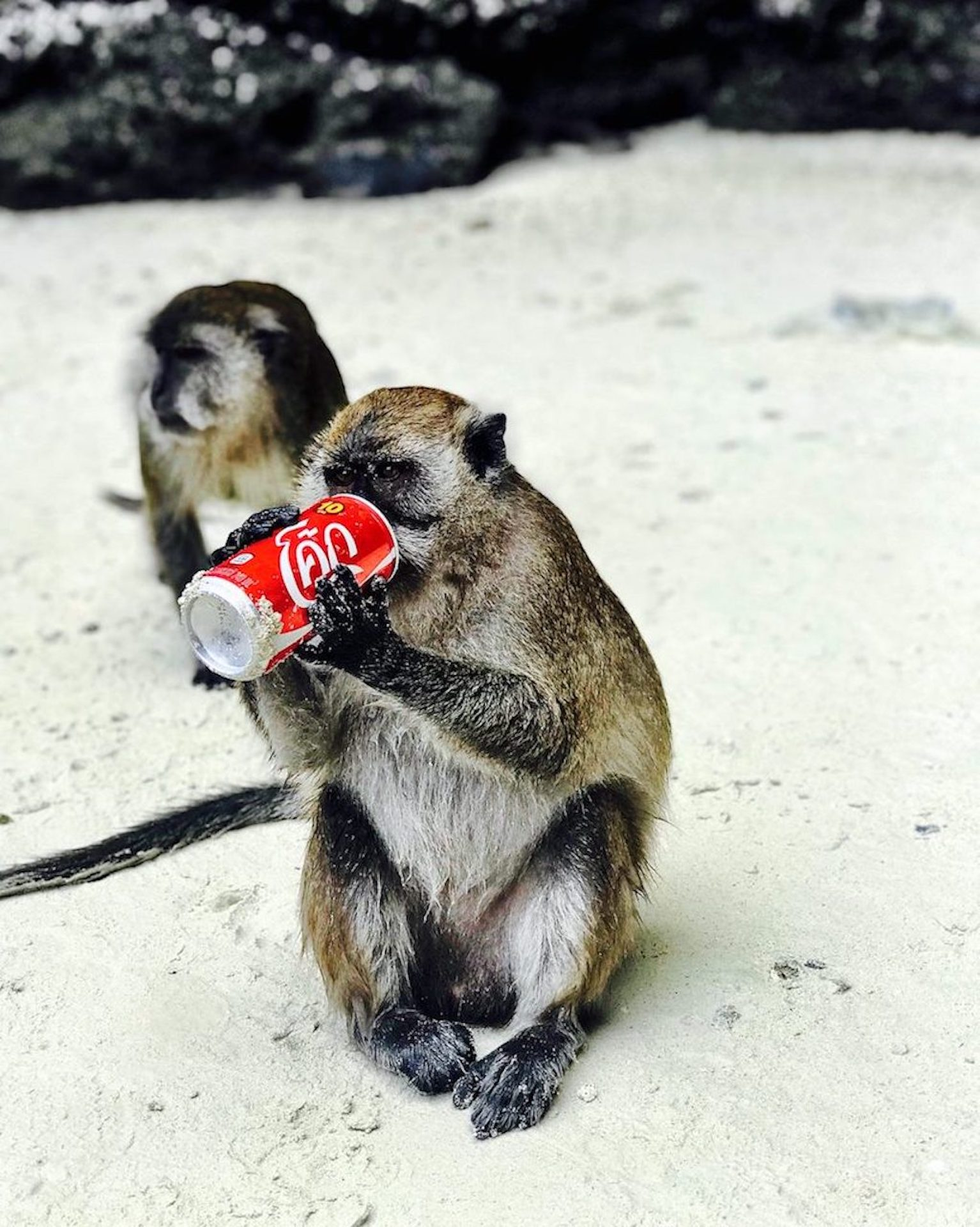 Monkey with Soda.jpg