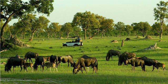 Herd of Animals.jpg