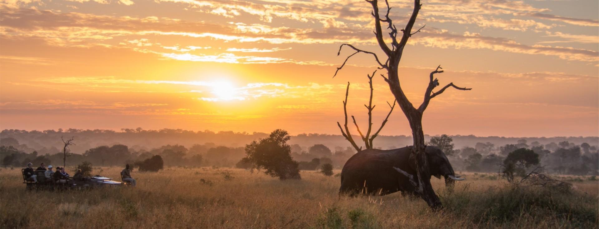 Elephants by Sunset.jpg