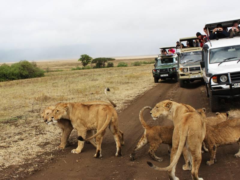 Kenya-Tanzania-Safari.jpg