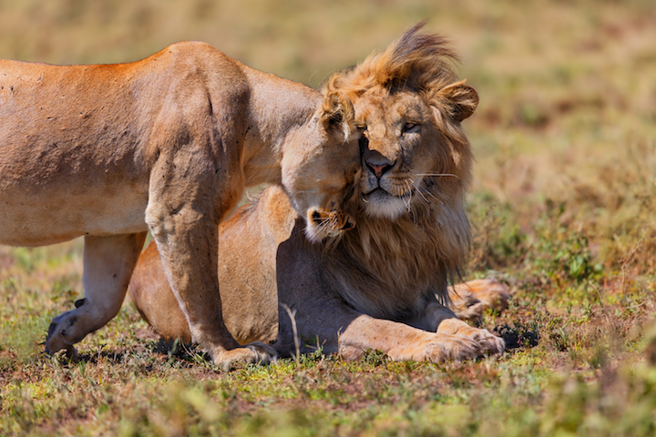 Tanzania Africa.jpg