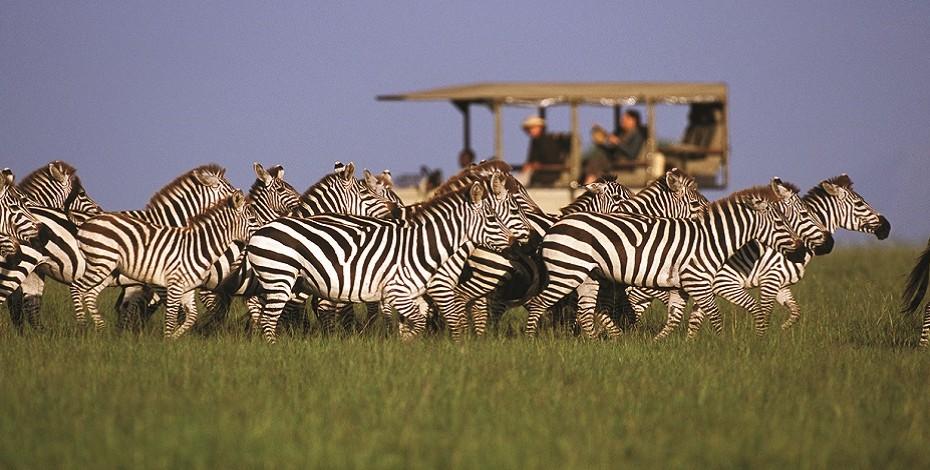Wildlife_00.jpg