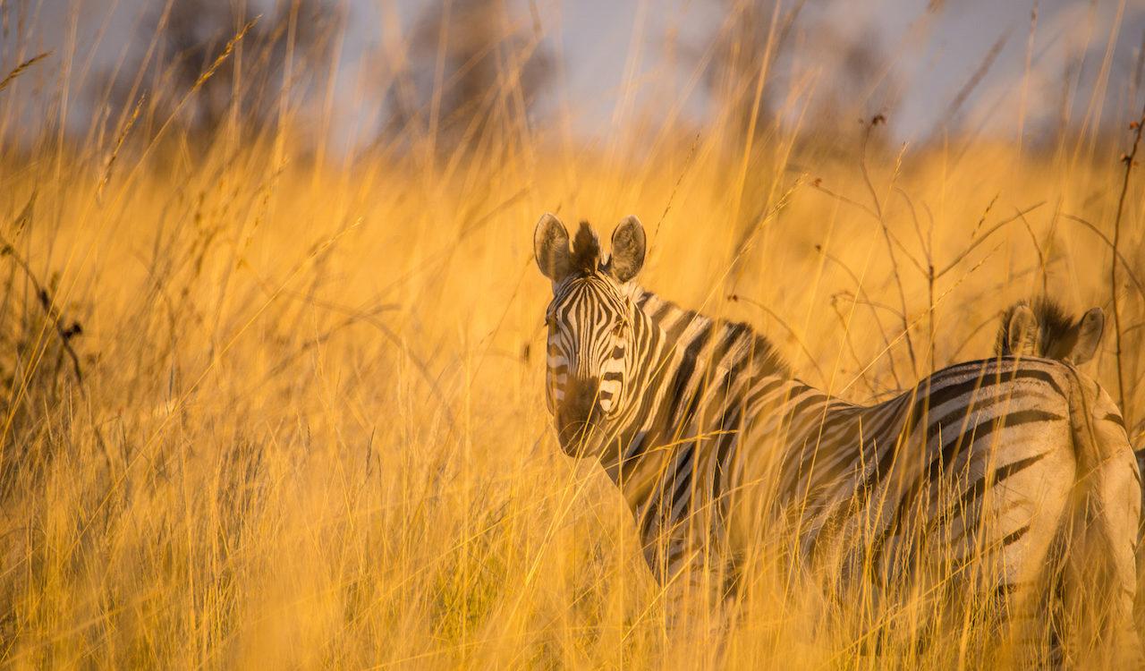 Wildlife_01.jpg