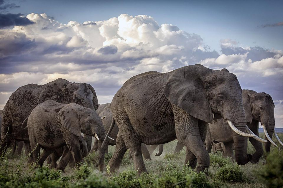 Herd of Elephants.jpg