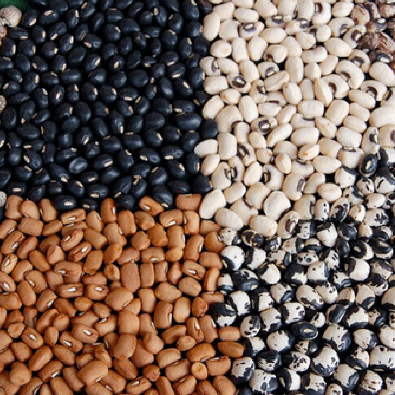 seeds_details.jpg
