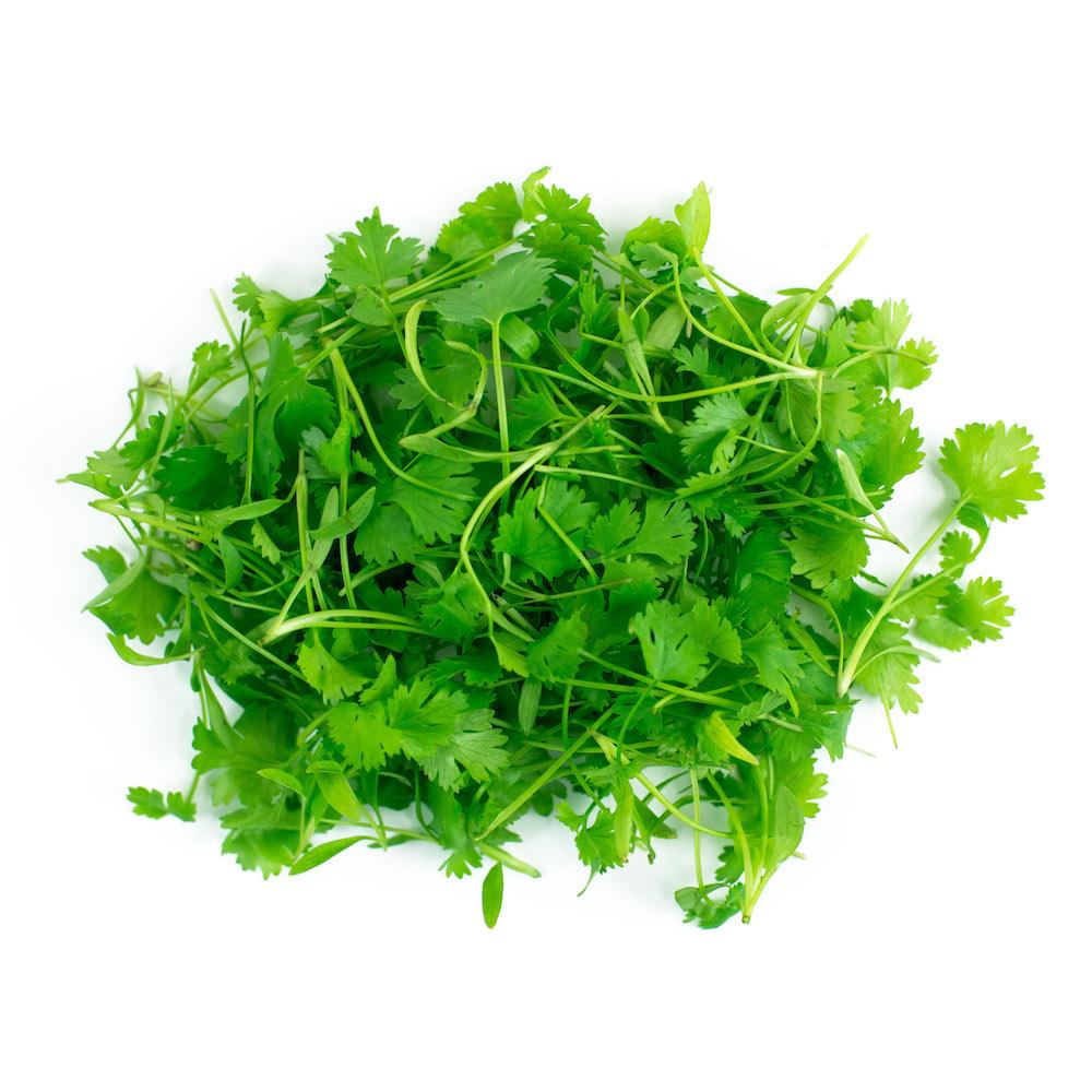 Cilantro Micro Greens