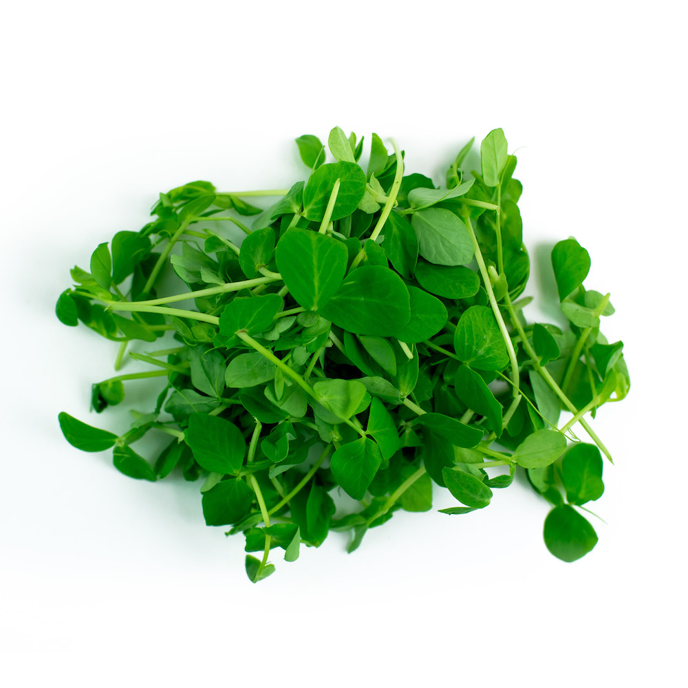 Pea Shoot Microgreens