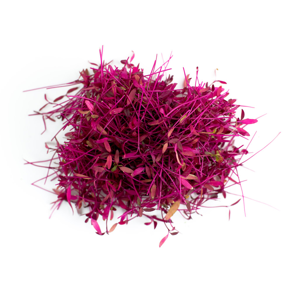 Red Amaranth Microgreen
