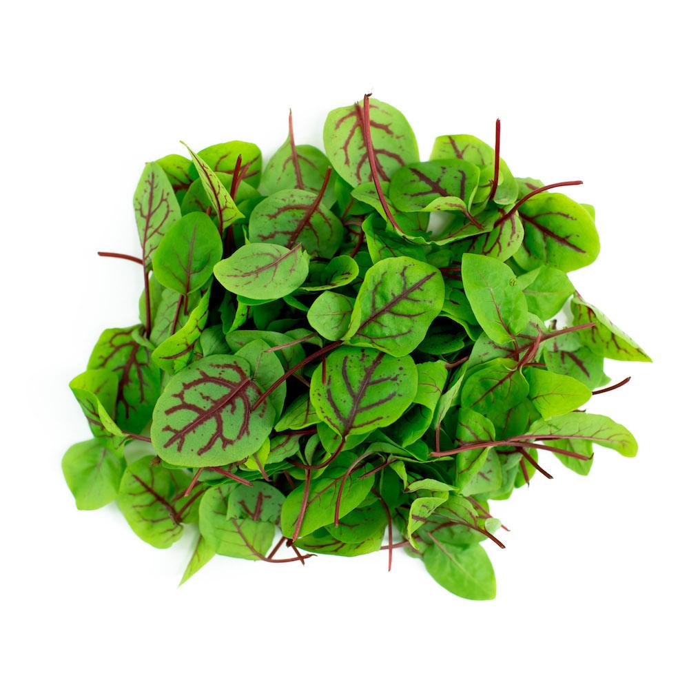 Sorrel Microgreens