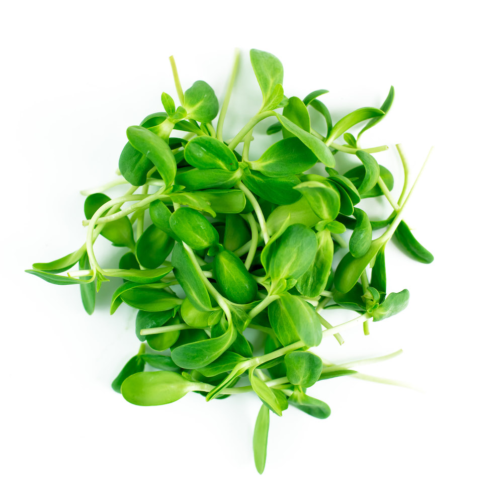 Sunflower Microgreen