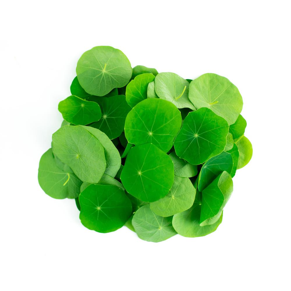 Nasturium Microgreen