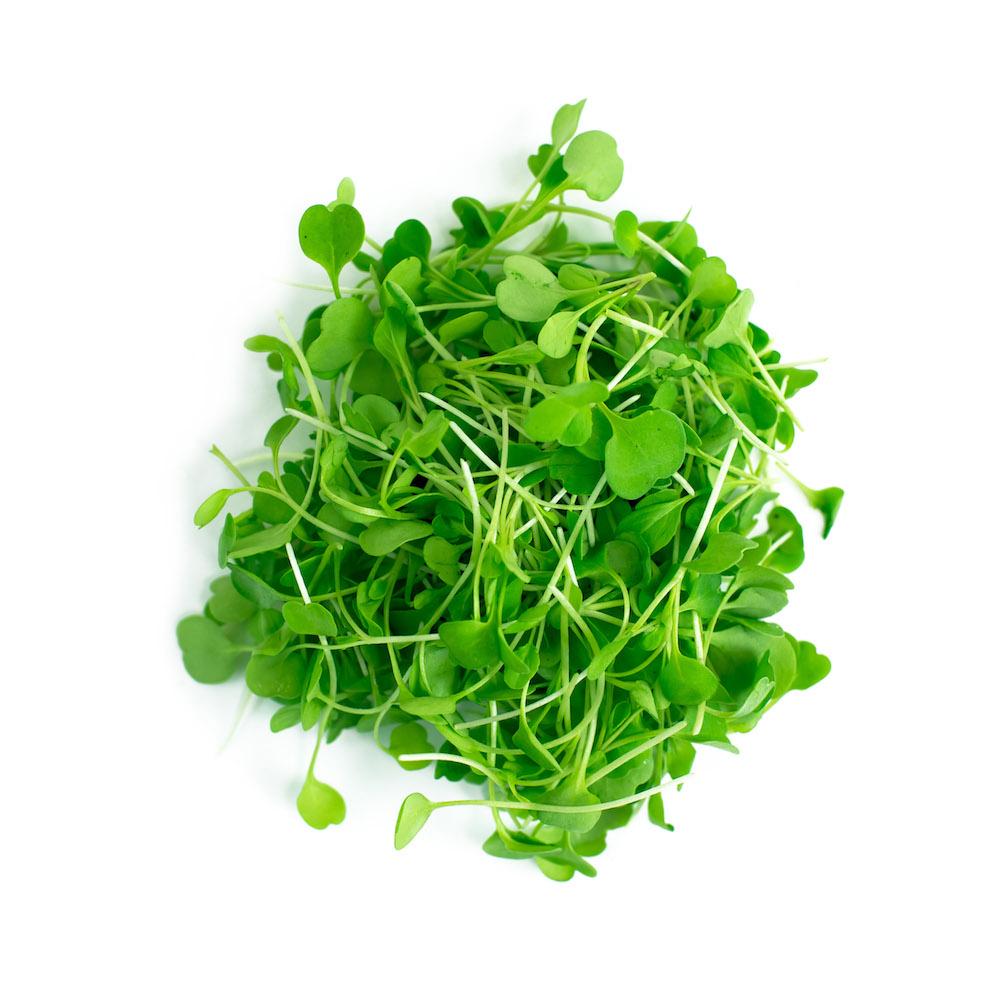 Arugula Microgreen