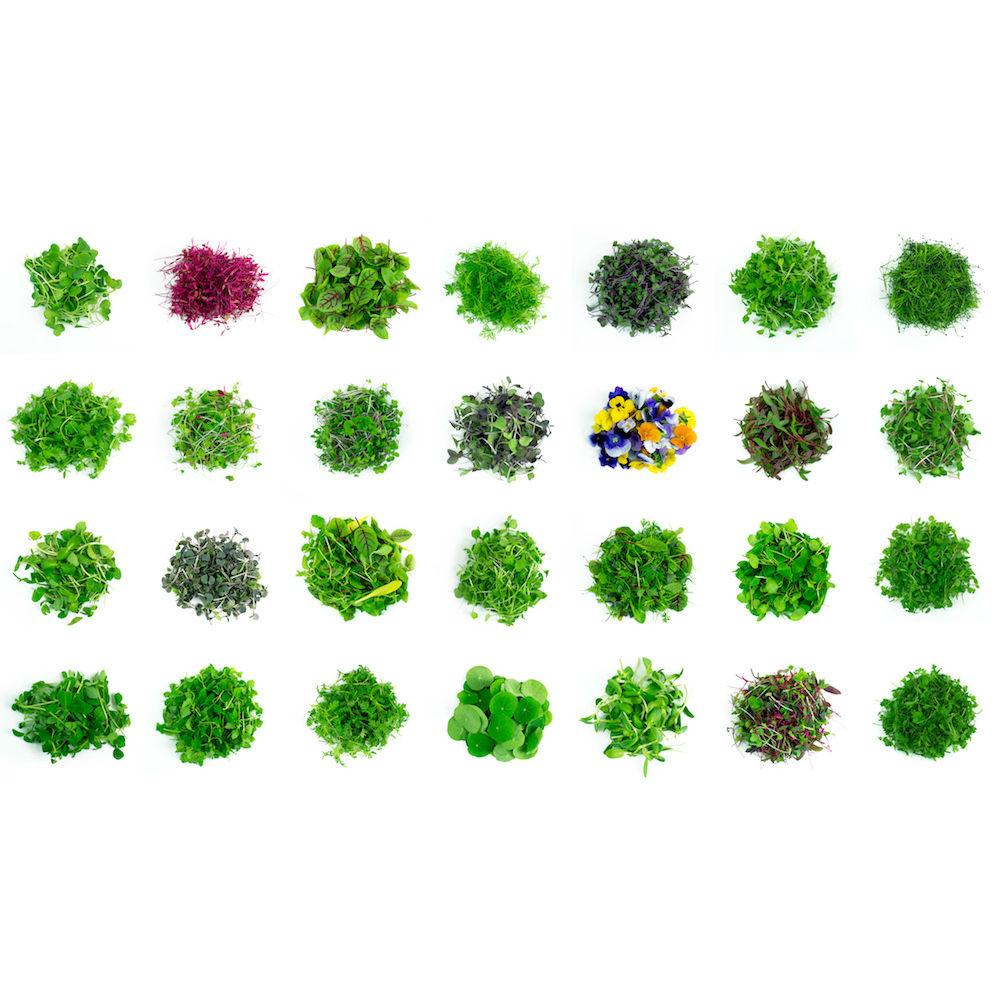2018-07-02 MicroGenesis-001 full lineup.jpg