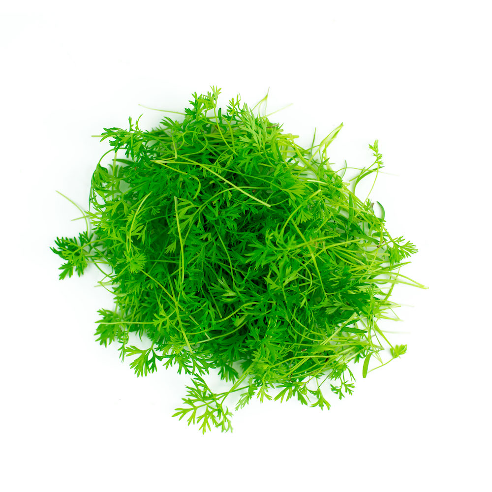 Carrot Microgreen