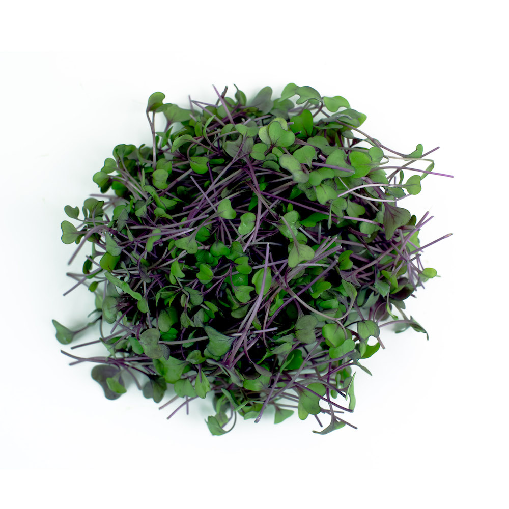 Cabbage Microgreen