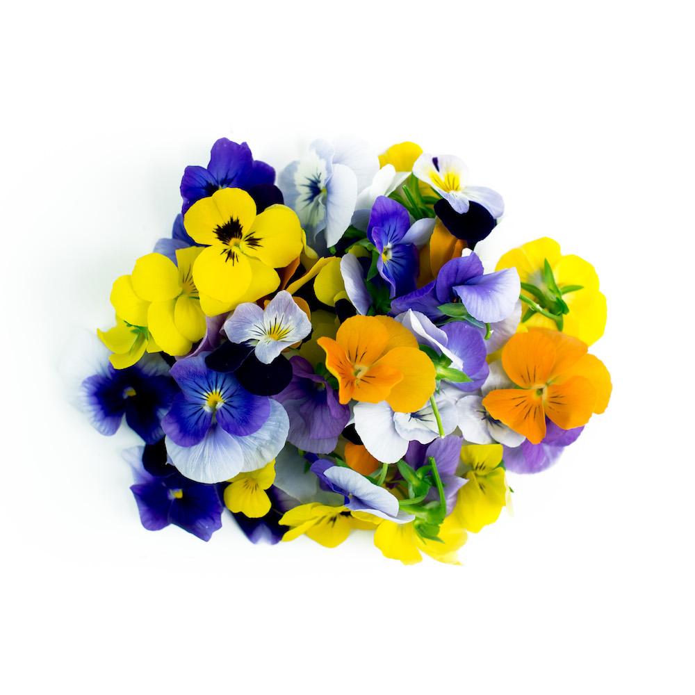 Viola Microgreens